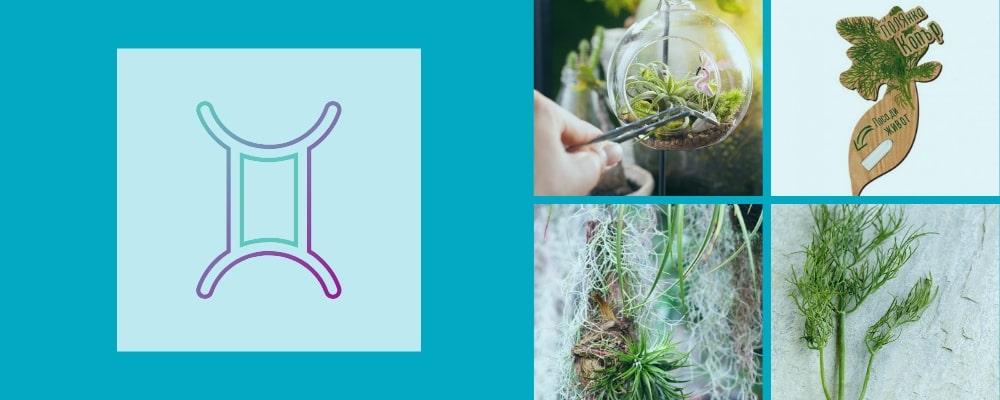 Растения за зодия Близнаци