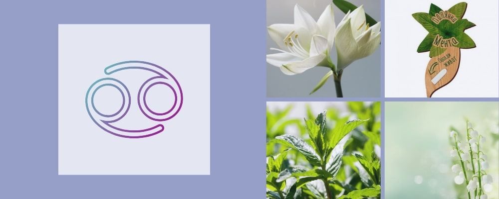 Растения за зодия Рак