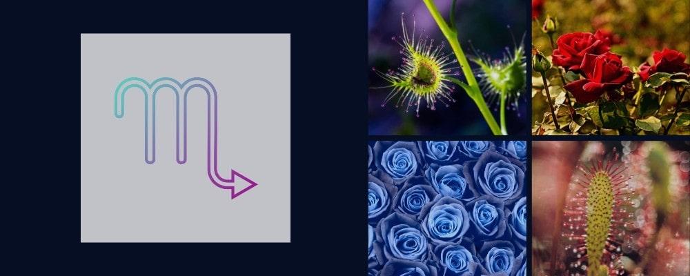 Цветя и растения за Скорпиона