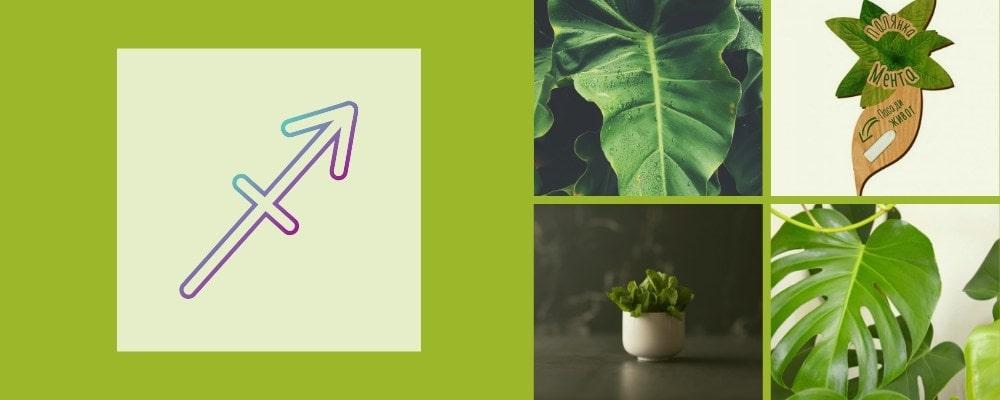 Растения за зодия Стрелец